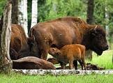4 октября - Всемирный день животных