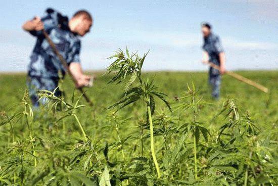 Праздник 11 марта - День работника органов наркоконтроля России