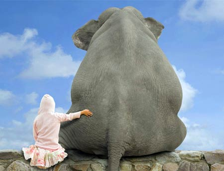 Праздник 20 июня – Всемирный день защиты слонов в зоопарках