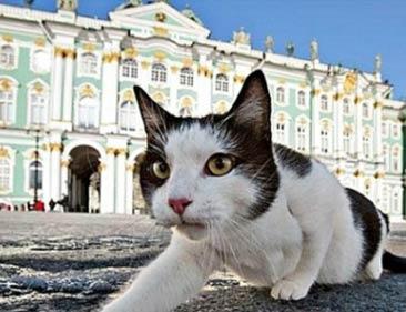 Праздник 8 июня – День петербуржских кошек